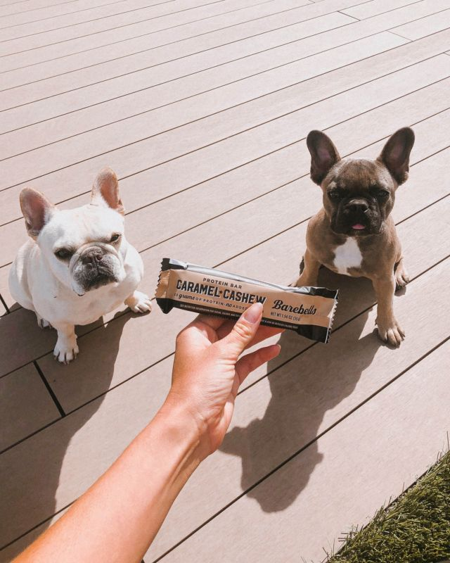 Happy National Pet Day! 🐶   Tag us with your Barebells Buddy to be featured! 🤩  #BarebellsUSA